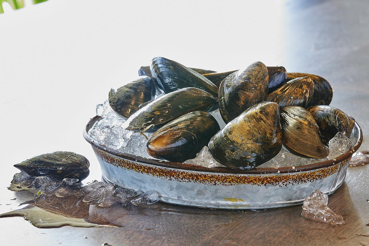 Bay Fresh New Jersey Mussel Seafood Boat